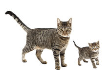 Gato y gatito fotografía de archivo
