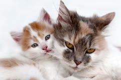 Gato y gatito fotografía de archivo libre de regalías