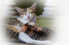 Gato y gatito Imágenes de archivo libres de regalías