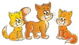 Gato y gatitos Fotografía de archivo libre de regalías