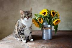 Gato y girasoles Fotografía de archivo libre de regalías