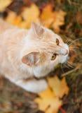 Gato y hojas de otoño Foto de archivo
