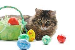 Gato y huevos de Pascua Imagen de archivo libre de regalías