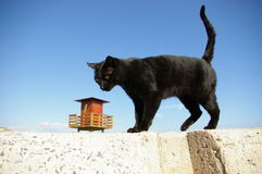 Gato y la casa Imagen de archivo libre de regalías