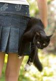 Gato y la muchacha Imagen de archivo libre de regalías