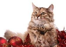 Gato y la Navidad Imágenes de archivo libres de regalías