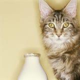 Gato y leche Fotografía de archivo libre de regalías