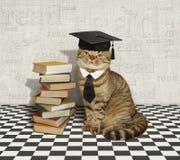 Gato y libros foto de archivo