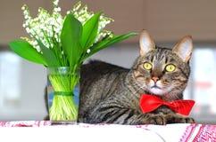 Gato y lirio de los valles Imagen de archivo