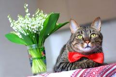Gato y lirio de los valles Foto de archivo libre de regalías