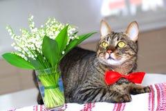 Gato y lirio de los valles Fotografía de archivo libre de regalías