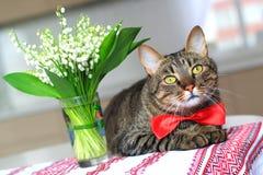 Gato y lirio de los valles Fotos de archivo libres de regalías