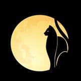 Gato y luna Imagen de archivo libre de regalías