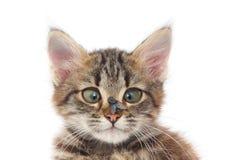 Gato y mosca fotos de archivo