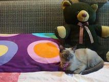 Gato y muñeca grande del oso marrón Foto de archivo