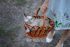 Gato y mujeres Fotos de archivo