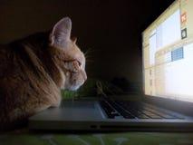 Gato y ordenador fotografía de archivo libre de regalías