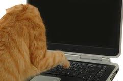Gato y ordenador Imagen de archivo libre de regalías