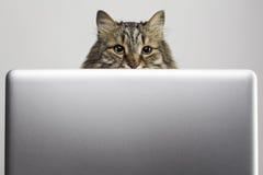 Gato y ordenador Fotos de archivo libres de regalías