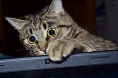 Gato y ordenador portátil Fotografía de archivo