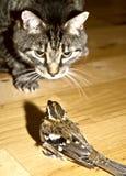 Gato y pájaro del peligro Fotografía de archivo libre de regalías