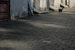 Gato y pájaro en calle imágenes de archivo libres de regalías