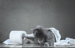 gato y papel higiénico foto de archivo