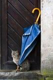 Gato y paraguas Foto de archivo libre de regalías