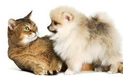 Gato y perrito Foto de archivo libre de regalías