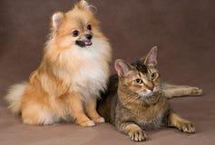 Gato y perrito en estudio imagen de archivo libre de regalías