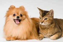 Gato y perrito en estudio fotos de archivo