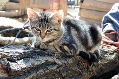 Gato y perro Foto de archivo libre de regalías