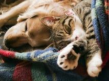 Gato y perro Fotografía de archivo libre de regalías