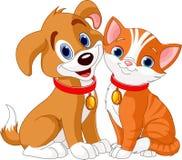 Gato y perro Fotos de archivo libres de regalías