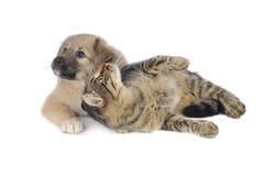 Gato y perro Foto de archivo