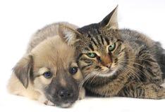 Gato y perro Fotos de archivo