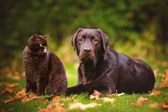 Gato y perro al aire libre en otoño Foto de archivo