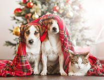 Gato y perro cerca del árbol de navidad foto de archivo libre de regalías