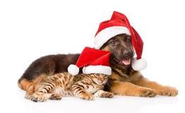 Gato y perro con el sombrero rojo Foco en gato Aislado en blanco Fotografía de archivo libre de regalías