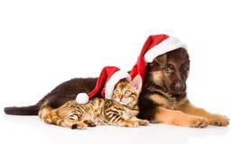 Gato y perro con el sombrero rojo Foco en gato En blanco Foto de archivo libre de regalías
