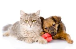 Gato y perro con la caja roja Aislado en el fondo blanco Imagen de archivo