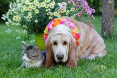 Gato y perro con las flores coloridas Fotos de archivo
