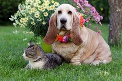 Gato y perro con las flores coloridas II Imágenes de archivo libres de regalías