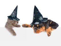 Gato y perro con los sombreros para Halloween que mira a escondidas de detrás el tablero vacío que mira abajo Aislado en el fondo Imagen de archivo libre de regalías