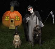 Gato y perro 3 de Halloween imagen de archivo