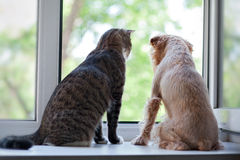 Gato y perro en la ventana Foto de archivo libre de regalías
