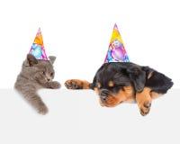 Gato y perro en los sombreros del cumpleaños que miran a escondidas de detrás retrete vacío del tablero fotografía de archivo libre de regalías