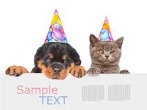 Gato y perro en los sombreros del cumpleaños que miran a escondidas de detrás tablero vacío y Fotos de archivo