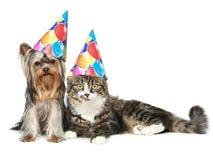 Gato y perro en sombrero del partido en un fondo blanco Foto de archivo libre de regalías