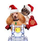 Gato y perro en sombreros rojos de la Navidad imagenes de archivo